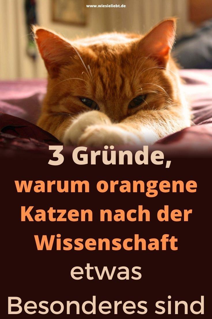 3-Gründe-warum-orangene-Katzen-nach-der-Wissenschaft-etwas-Besonderes-sind
